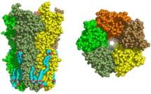 Représentation dans l'espace du récepteur nicotinique. © Institut Pasteur