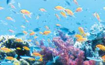 Avec AQUALOC®, offrez un aquarium d'eau de mer à vos résidents !